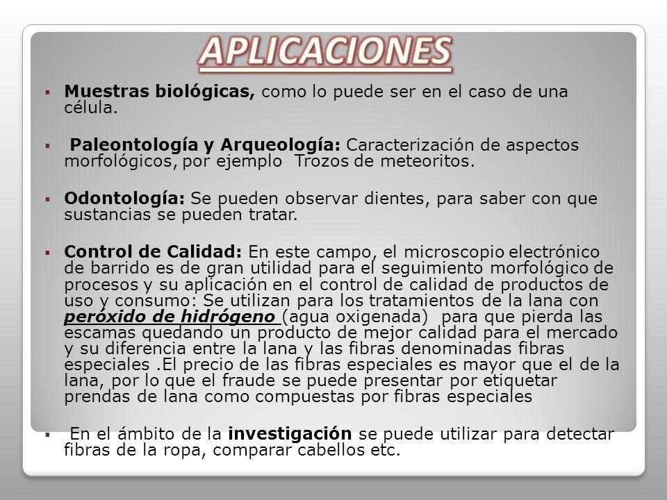 APLICACIONES Muestras biológicas, como lo puede ser en el caso de una célula.