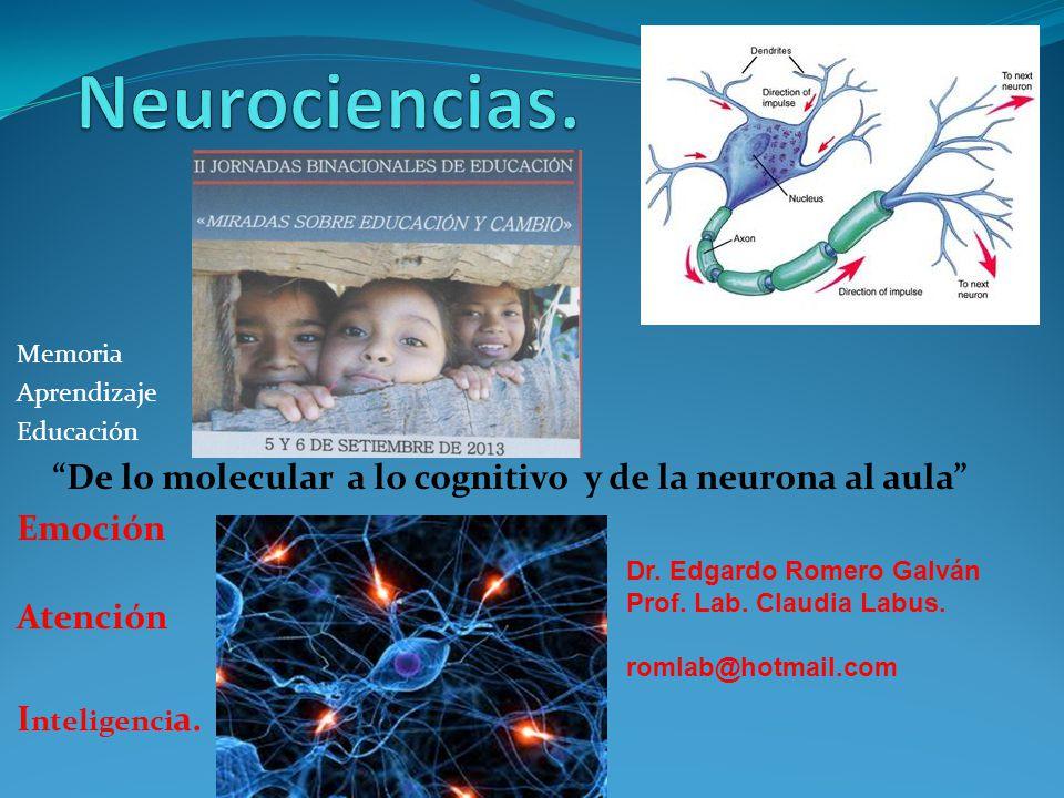 Neurociencias. Memoria. Aprendizaje. Educación. De lo molecular a lo cognitivo y de la neurona al aula