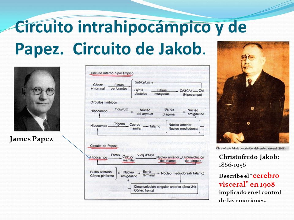 Circuito De Papez : Neurociencias memoria aprendizaje educación ppt video
