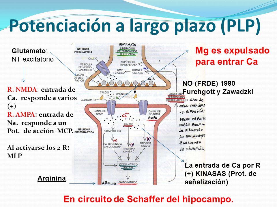 Potenciación a largo plazo (PLP)