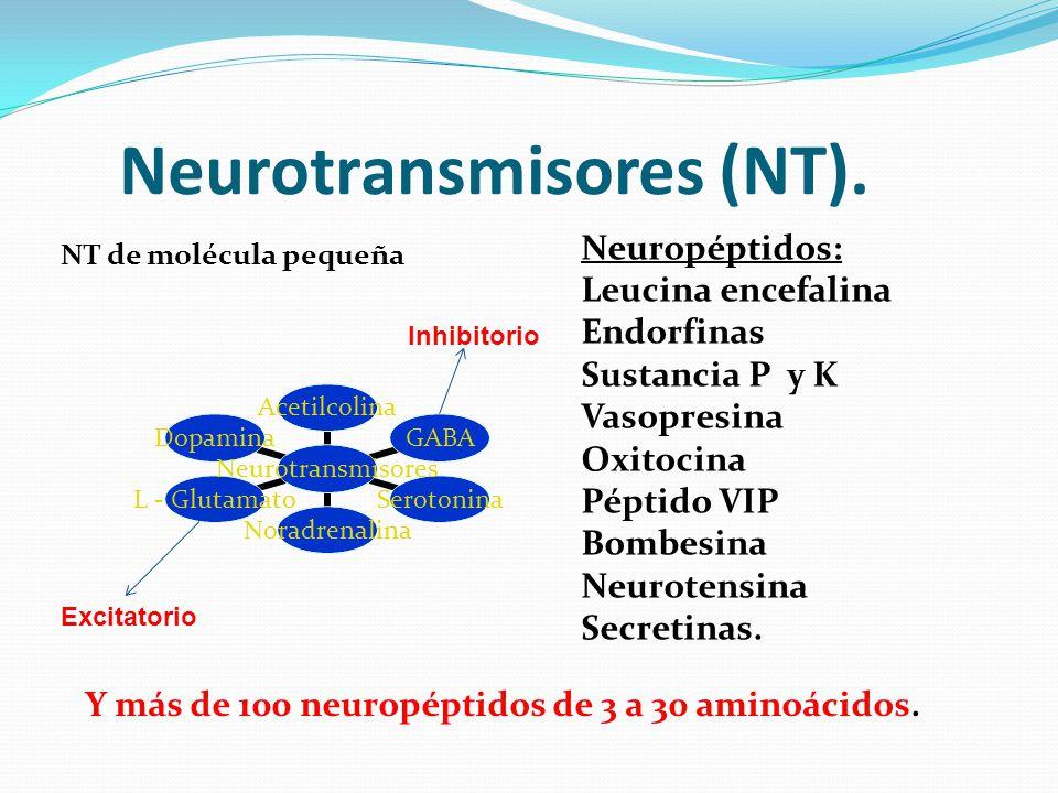 Neurotransmisores (NT).