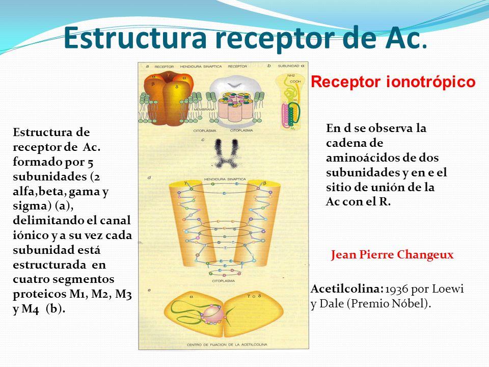 Estructura receptor de Ac.