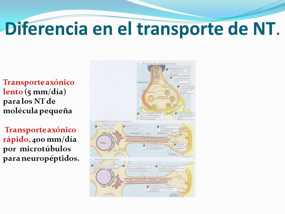 Diferencia en el transporte de NT.