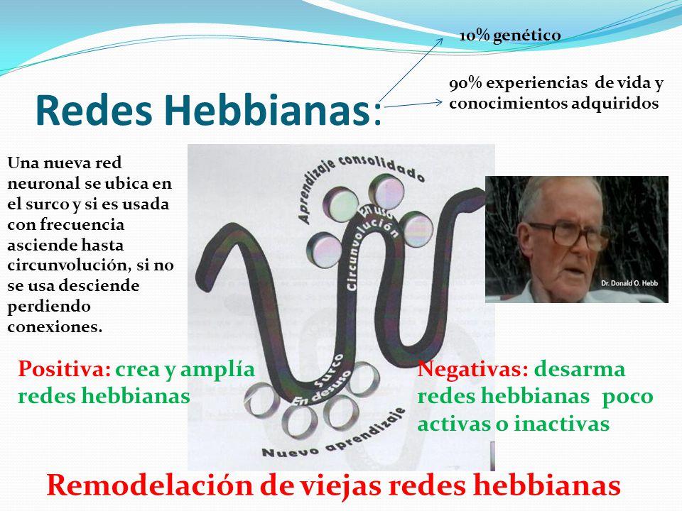 Redes Hebbianas: Positiva: crea y amplía redes hebbianas