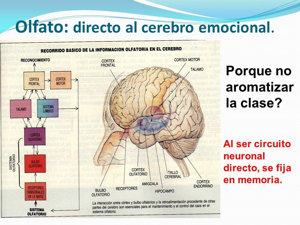 Olfato: directo al cerebro emocional.