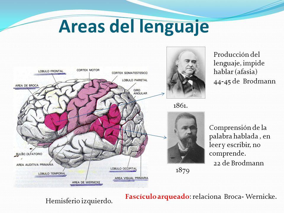 Areas del lenguaje Producción del lenguaje, impide hablar (afasia)