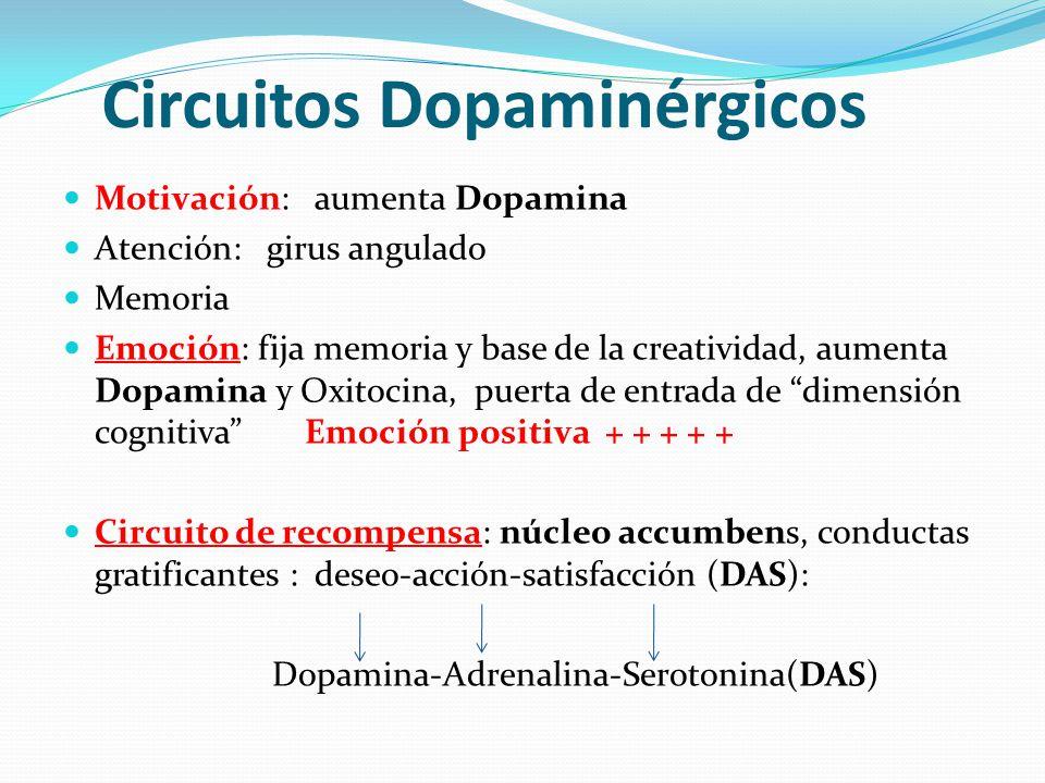 Circuitos Dopaminérgicos