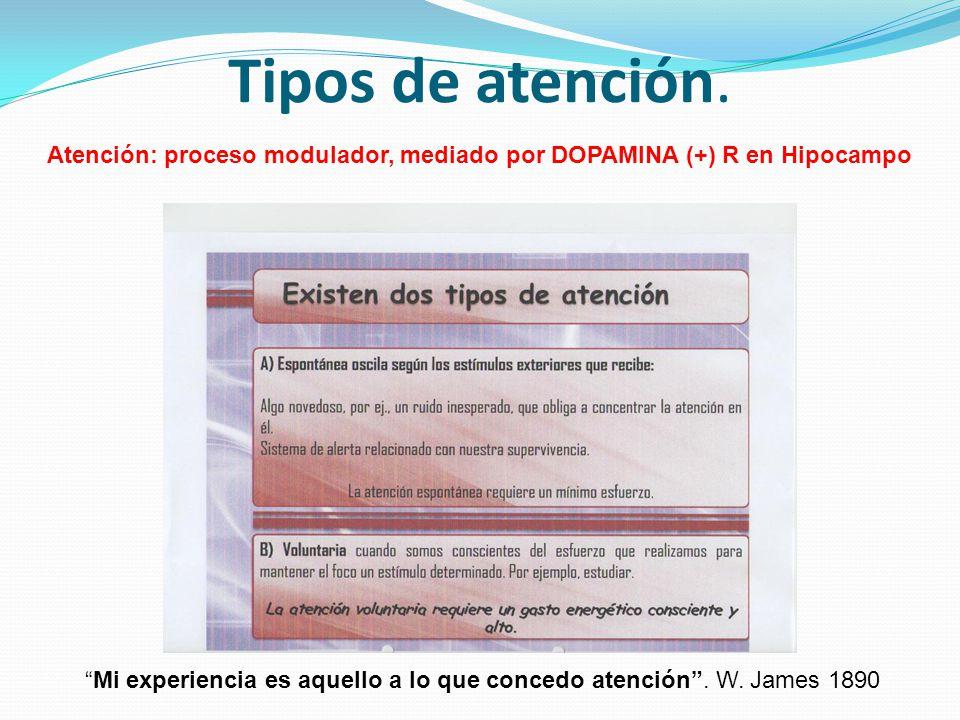 Tipos de atención. Atención: proceso modulador, mediado por DOPAMINA (+) R en Hipocampo.