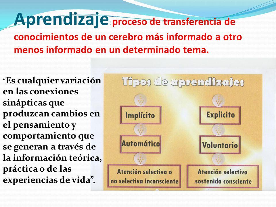 Aprendizaje: proceso de transferencia de conocimientos de un cerebro más informado a otro menos informado en un determinado tema.