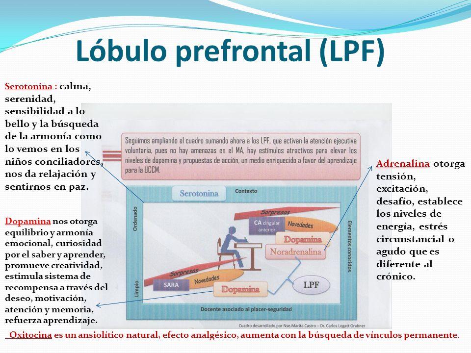 Lóbulo prefrontal (LPF)