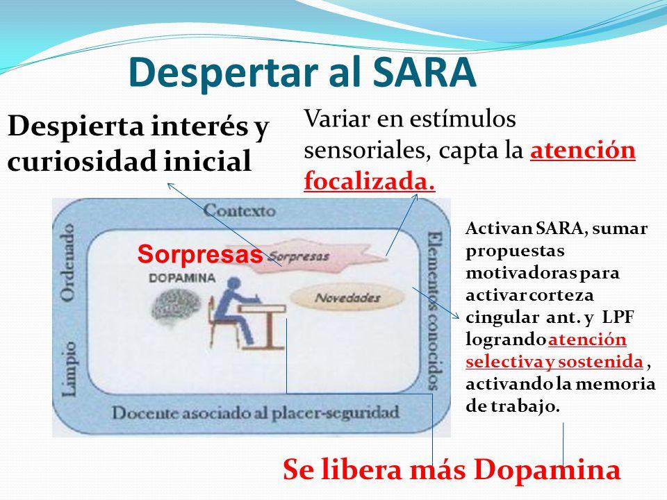 Despertar al SARA Despierta interés y curiosidad inicial