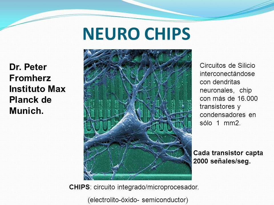 NEURO CHIPS Dr. Peter Fromherz Instituto Max Planck de Munich.