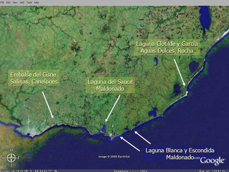Laguna Clotilde y García Aguas Dulces, Rocha
