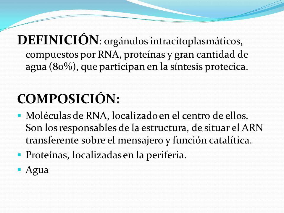 DEFINICIÓN: orgánulos intracitoplasmáticos, compuestos por RNA, proteínas y gran cantidad de agua (80%), que participan en la síntesis protecica.