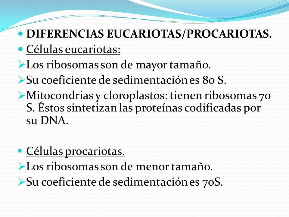 DIFERENCIAS EUCARIOTAS/PROCARIOTAS.