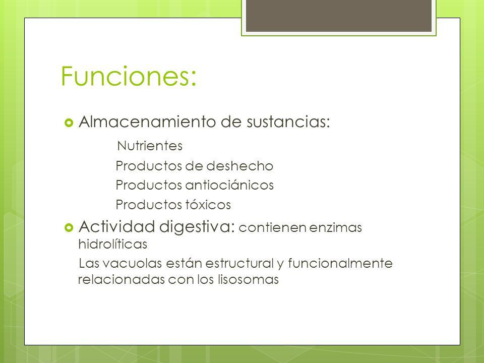 Funciones: Almacenamiento de sustancias: Nutrientes