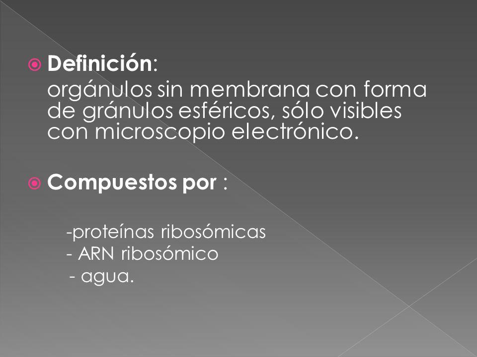 Definición: orgánulos sin membrana con forma de gránulos esféricos, sólo visibles con microscopio electrónico.
