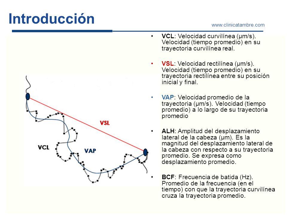 Introducción www.clinicatambre.com. VCL: Velocidad curvilínea (µm/s). Velocidad (tiempo promedio) en su trayectoria curvilínea real.