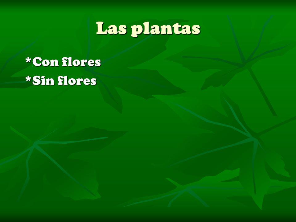 Las plantas *Con flores *Sin flores