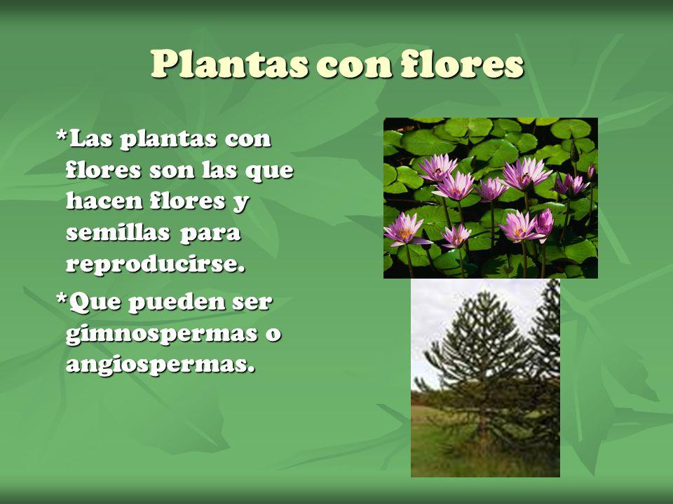 Plantas con flores *Las plantas con flores son las que hacen flores y semillas para reproducirse.