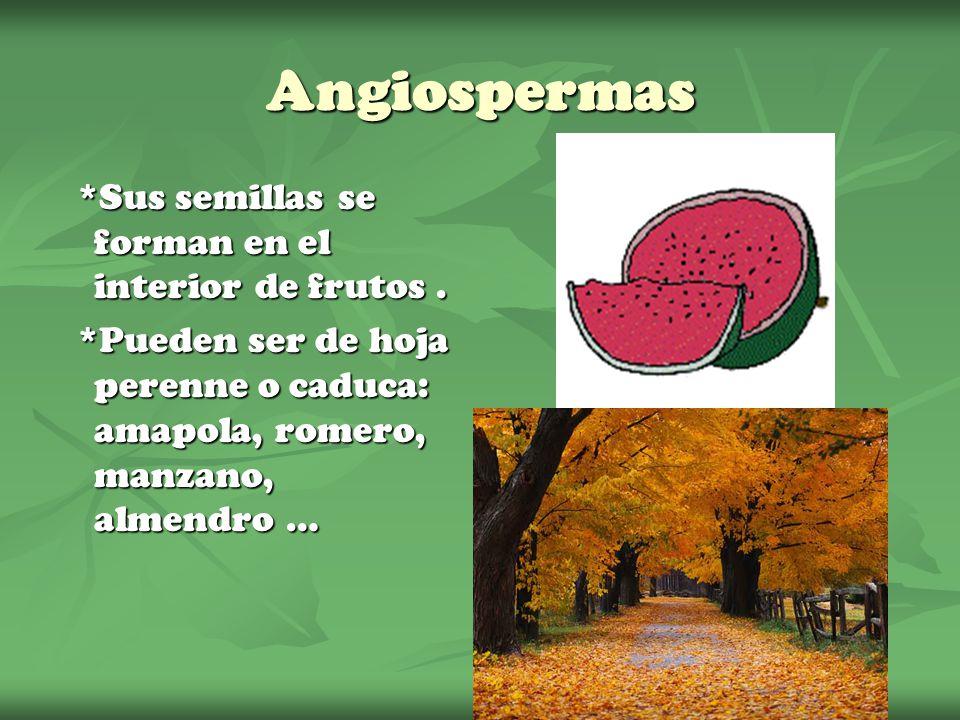 Angiospermas *Sus semillas se forman en el interior de frutos .