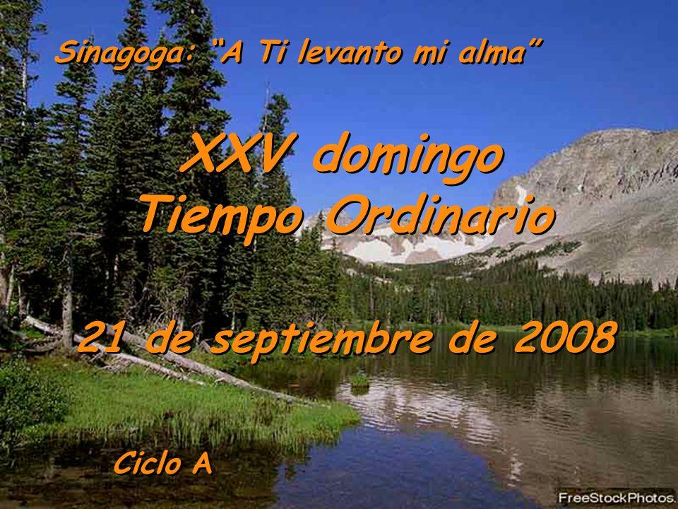 XXV domingo Tiempo Ordinario