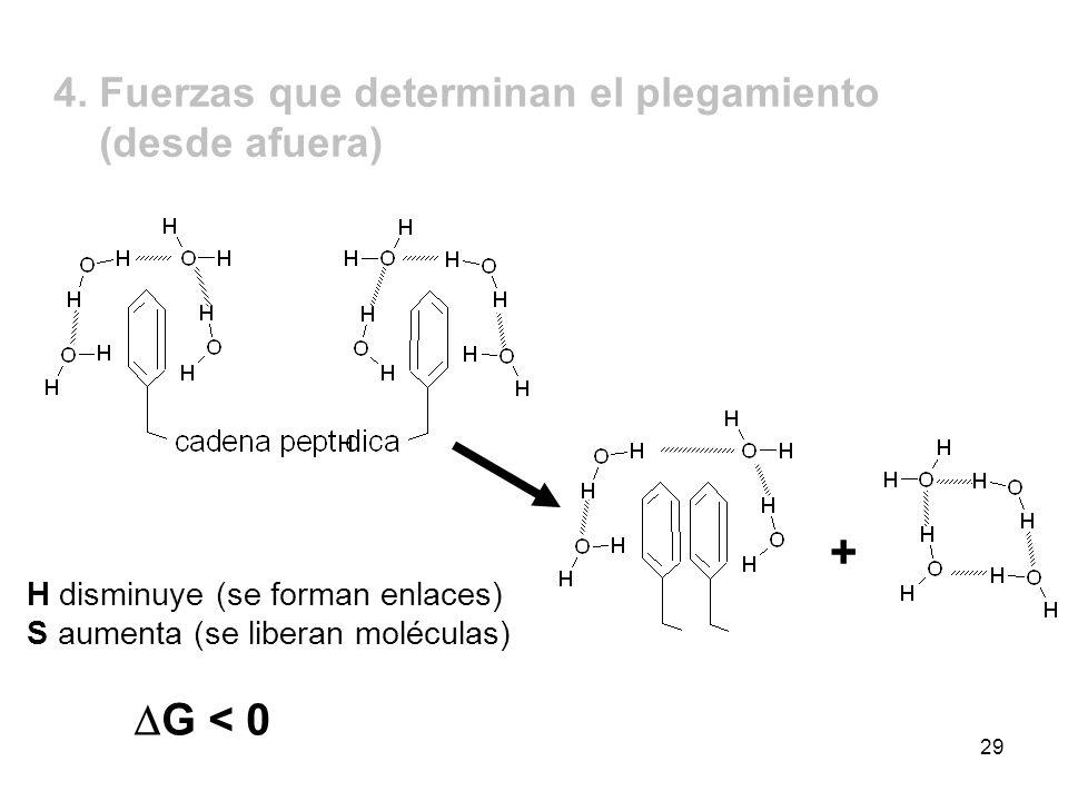 + DG < 0 4. Fuerzas que determinan el plegamiento (desde afuera)