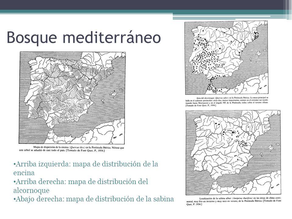 Bosque mediterráneo Arriba izquierda: mapa de distribución de la encina. Arriba derecha: mapa de distribución del alcornoque.