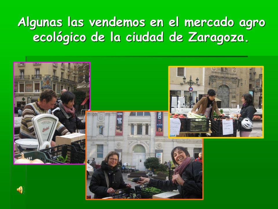 Algunas las vendemos en el mercado agro ecológico de la ciudad de Zaragoza.