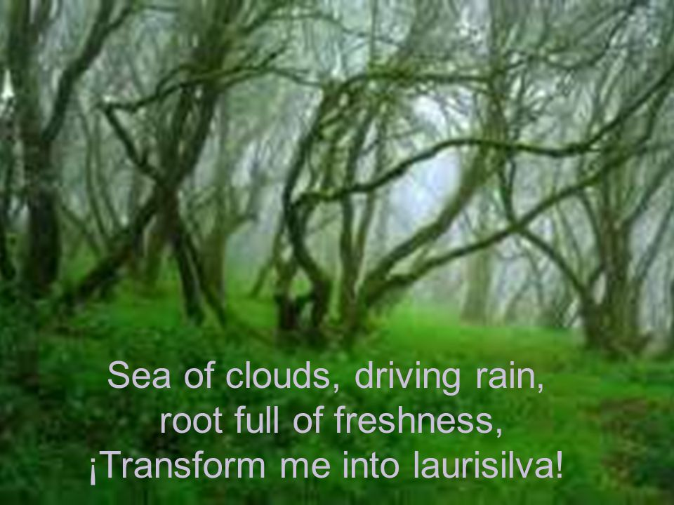 Sea of clouds, driving rain, root full of freshness,