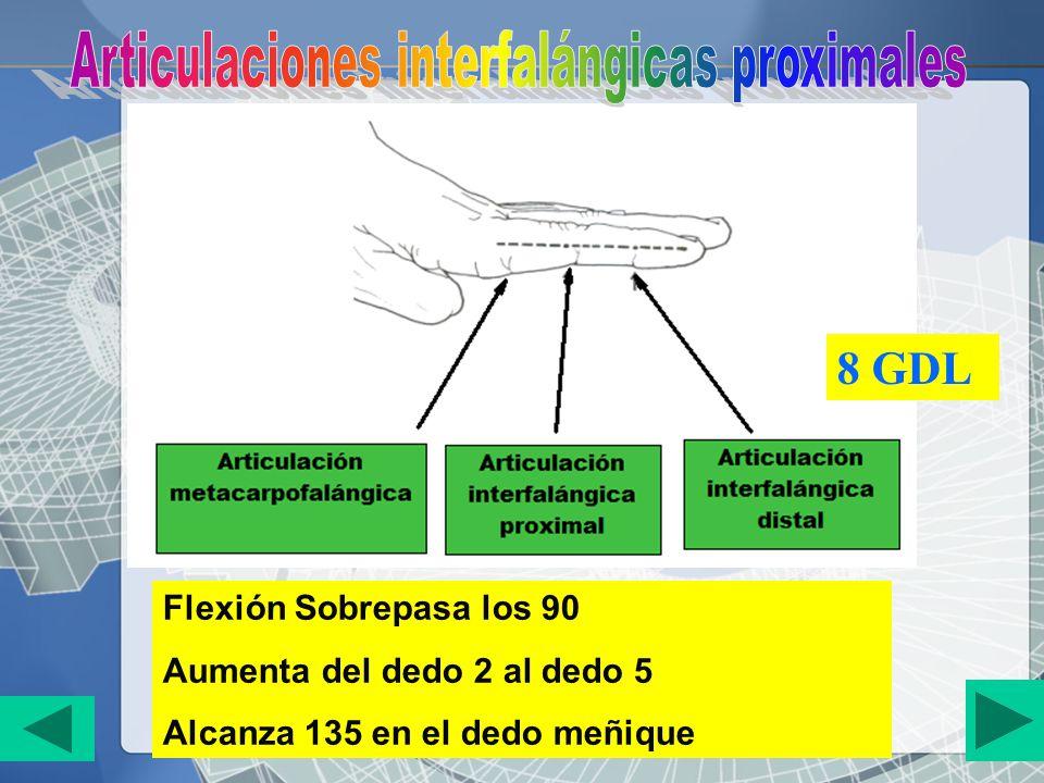 Articulaciones interfalángicas proximales