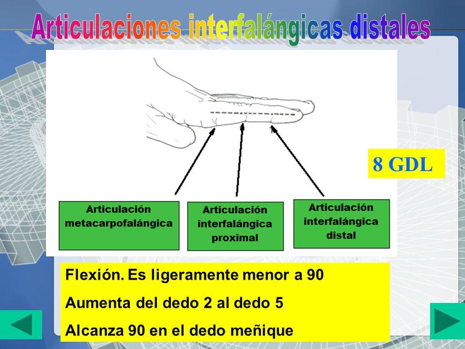 Articulaciones interfalángicas distales