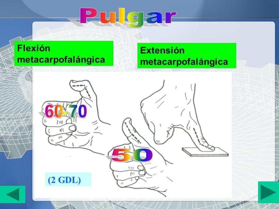 Pulgar 60-70 50 Flexión metacarpofalángica
