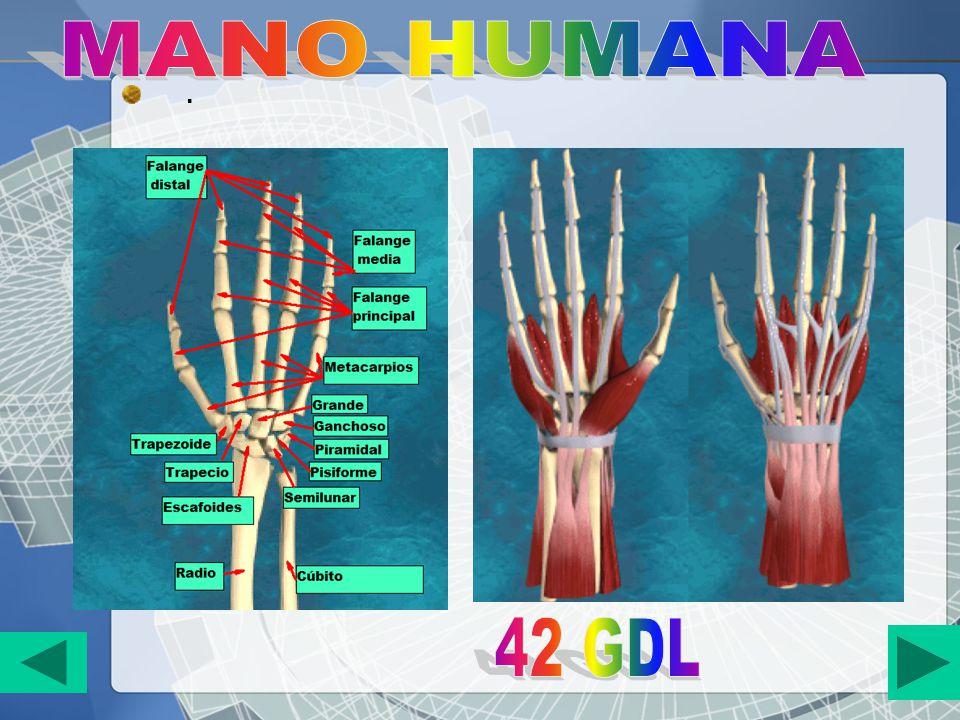 MANO HUMANA . 42 GDL
