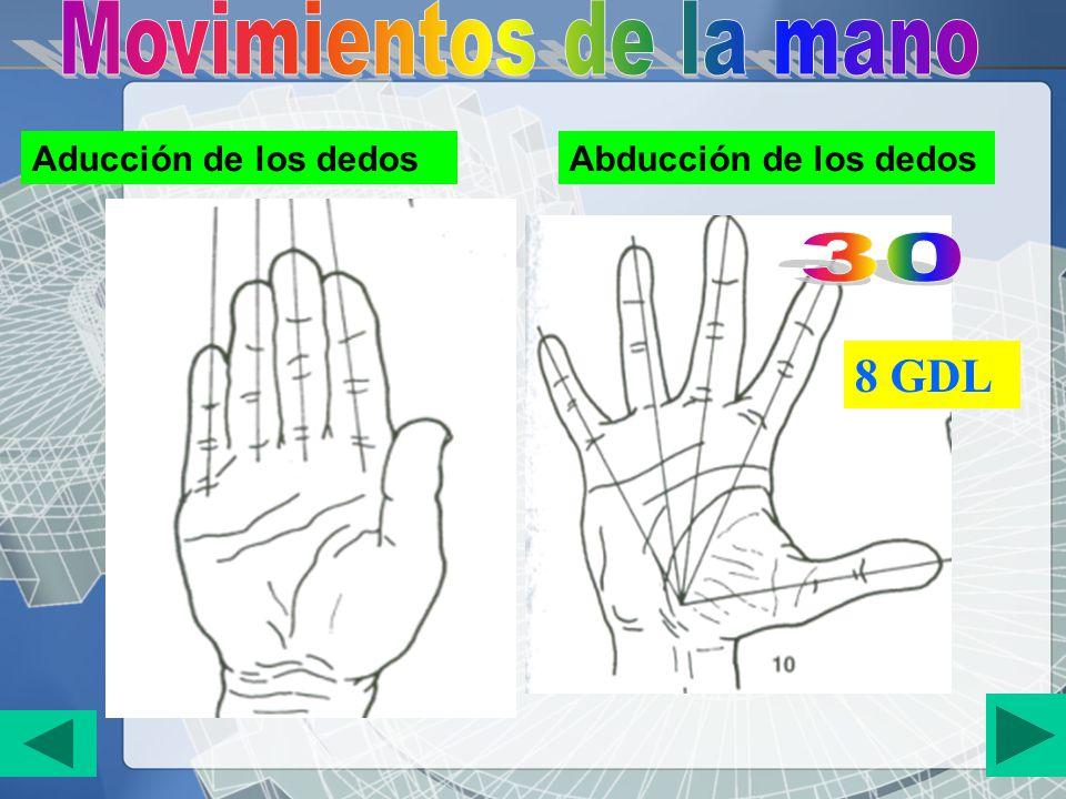 Movimientos de la mano 30 8 GDL Aducción de los dedos