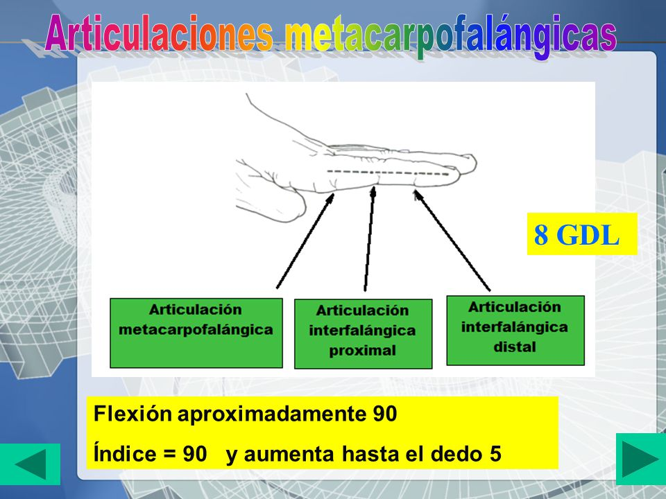 Articulaciones metacarpofalángicas