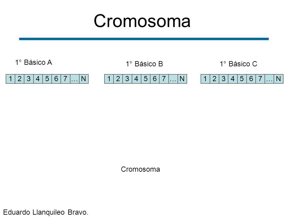 Cromosoma 1° Básico A 1° Básico B 1° Básico C 1 2 3 4 5 6 7 … N 1 2 3
