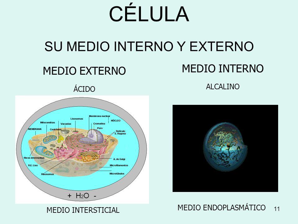 CÉLULA SU MEDIO INTERNO Y EXTERNO