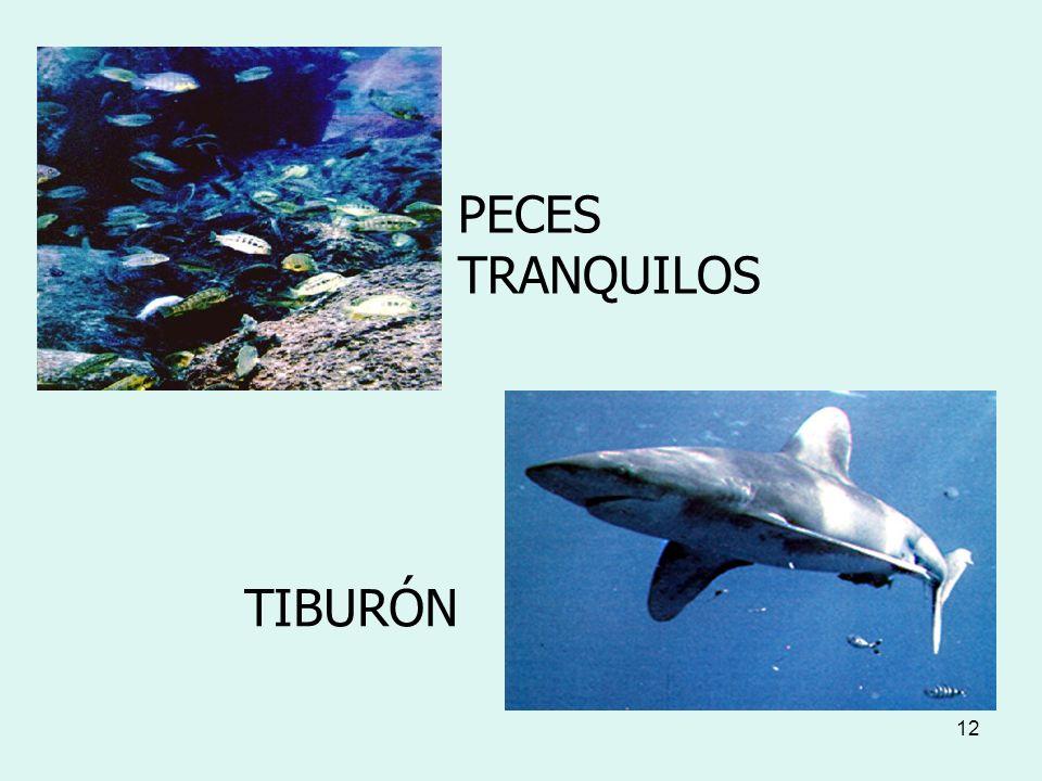 PECES TRANQUILOS TIBURÓN