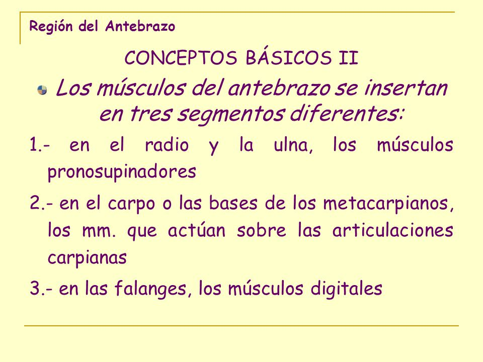 Los músculos del antebrazo se insertan en tres segmentos diferentes: