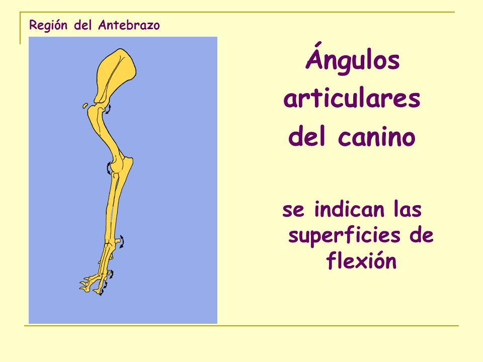 se indican las superficies de flexión