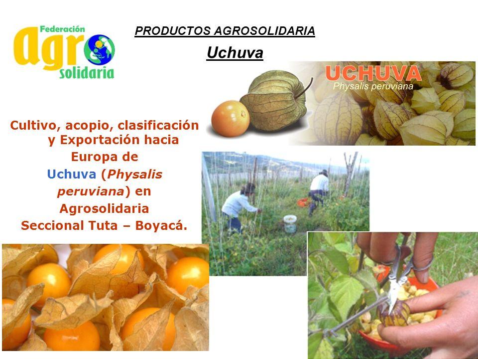 Uchuva PRODUCTOS AGROSOLIDARIA