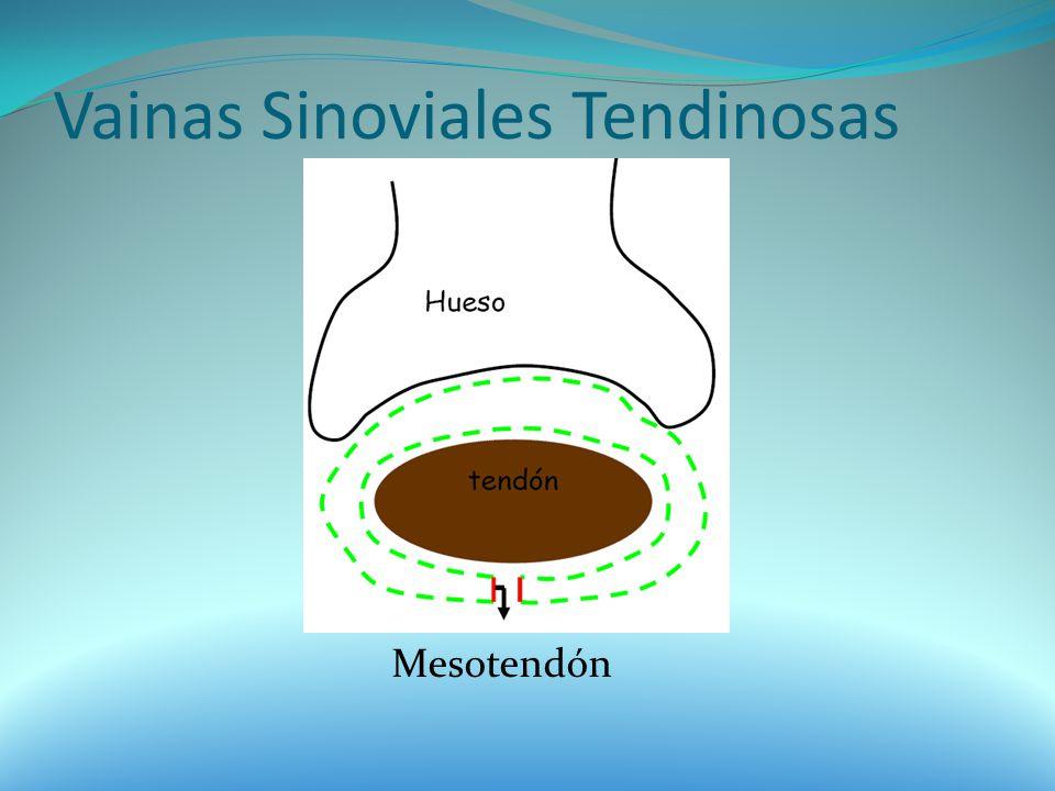 Vainas Sinoviales Tendinosas