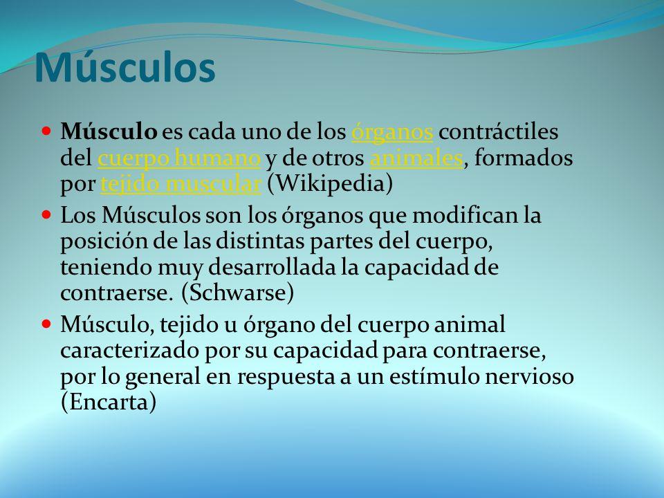 Músculos Músculo es cada uno de los órganos contráctiles del cuerpo humano y de otros animales, formados por tejido muscular (Wikipedia)