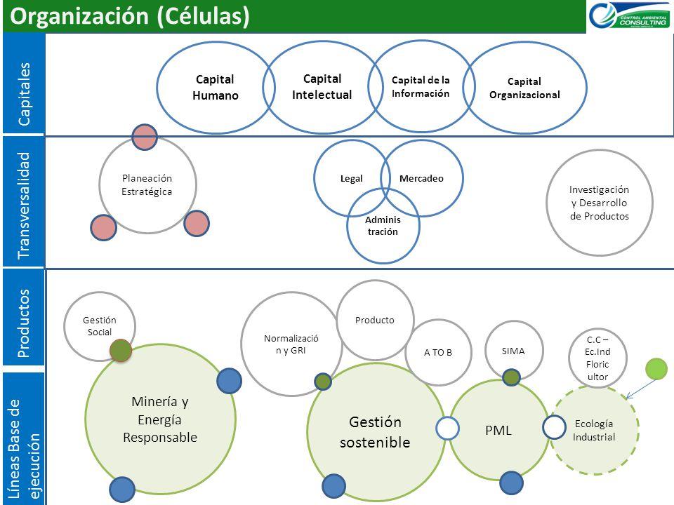 Capital de la Información Capital Organizacional