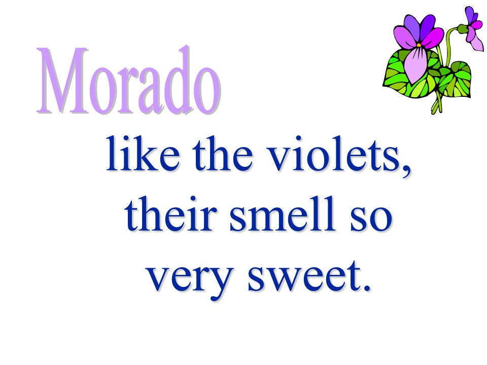 like the violets, their smell so very sweet.