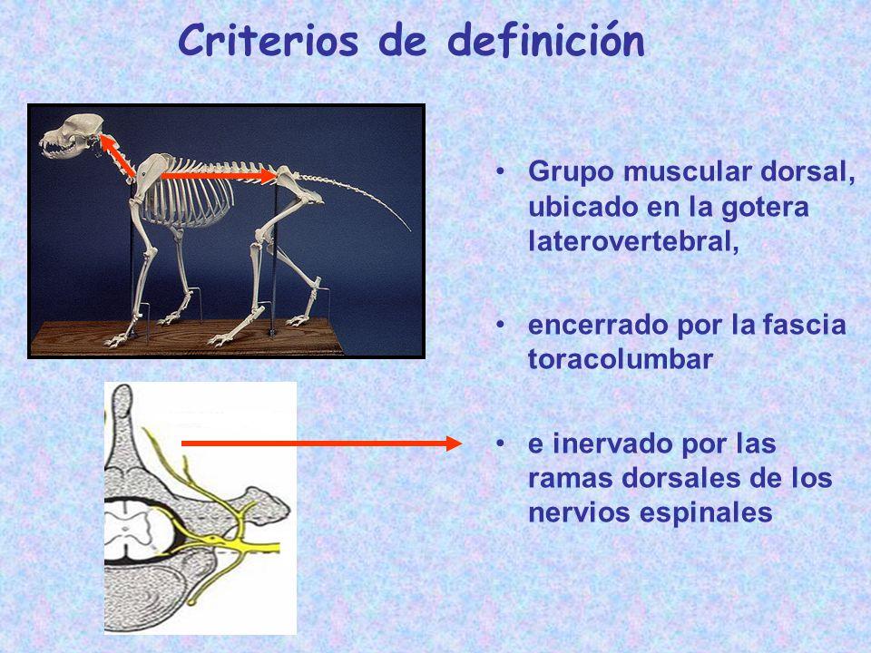 Criterios de definición