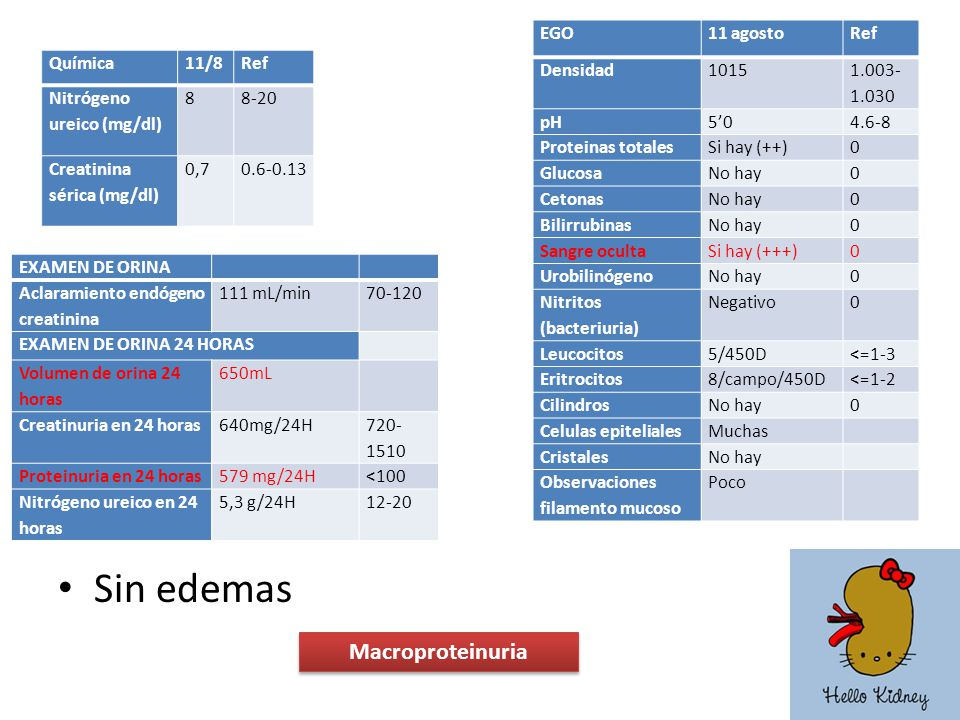 Sin edemas Macroproteinuria EGO 11 agosto Ref Densidad 1015