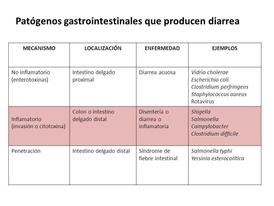 Patógenos gastrointestinales que producen diarrea