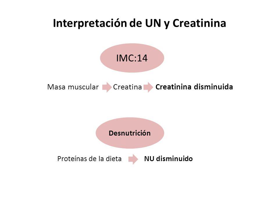 Interpretación de UN y Creatinina